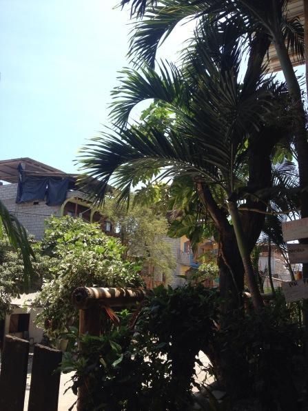 palm tree montanita