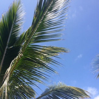 palm tree Puerto Lopez