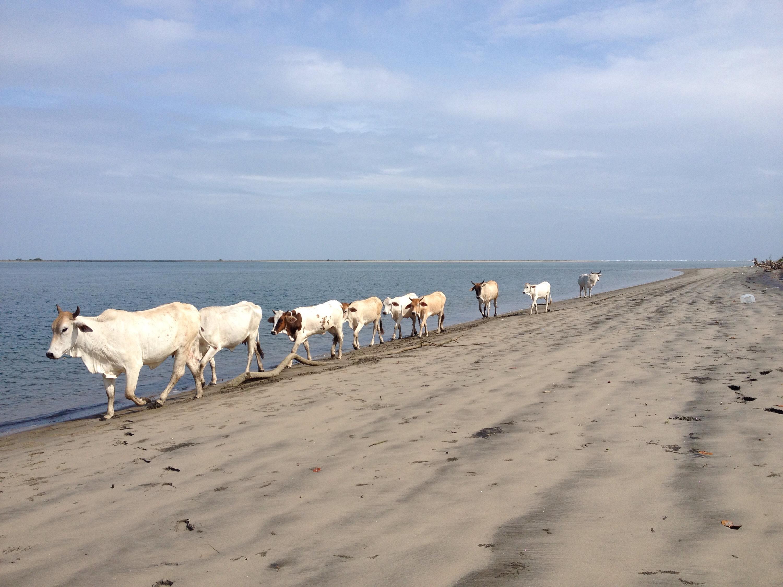 bolivar beach